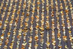 Perfeccionismo de las hojas de oto?o fotos de archivo