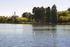Perfect afternoon in the park. Swans on the emerald lake III Royalty Free Stock Photos