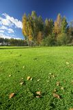 Perfect autumn scenery. Autumn scenery with juicy grass stock image
