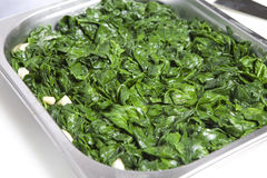 Perfect baby spinach greens with garlic Royalty Free Stock Images