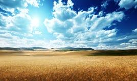 Barley  hills Tuscany, Italy Stock Image