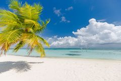Beautiful beach scenery, palm leaf and blue sea with white sand, exotic tropical landscape view stock images