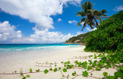 Perfect beach in Seychelles Royalty Free Stock Photography