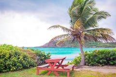 Perfect biała piaskowata plaża z turkusu wodnym i dużym drzewkiem palmowym zdjęcia royalty free