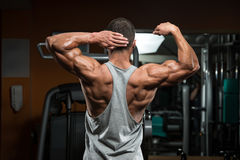 Perfect Biceps Stock Image
