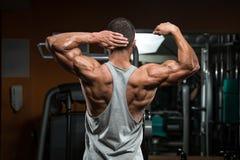 Perfect Biceps Stock Image