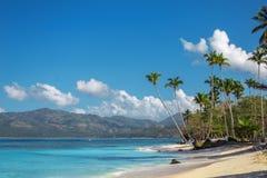 Perfect Caraïbisch landschap met hoge palmen stock afbeelding
