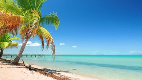 Perfect Caribbean Blue Sea and a Palm Tree stock video footage