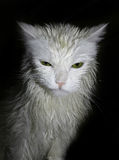 Perfect cat Stock Images