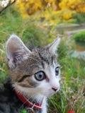 My cat is love Stock Photo