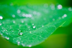 A perfect circle. A perfectly circular rain drop sits on a leaf royalty free stock photography