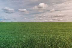 Colorful Bright Perfect Sunny Green Field Landscape With Blue Cloudy Sky and Clear Field stock images