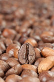 Perfect coffe bean Stock Images