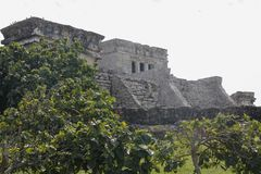 Plants and the Castle of Tulum, Mexico. Perfect combination of the green plants and the gray of the castle of tulum, where one can admire the ruins and the royalty free stock photo