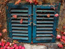 Blue windows with autumn leaves royalty free stock photo