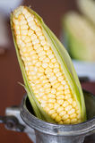 A perfect corn inside of a Mill pretending to be milled.  Royalty Free Stock Photography