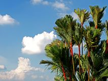 The Perfect Day. Beautiful sky with fluffy clouds & plants Royalty Free Stock Images