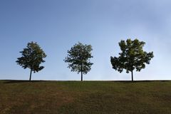 Perfect distance. Three trees in autumn. Perfect distance Royalty Free Stock Images