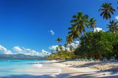 Perfect empty Caribbean sandy beach with clear water and green palm trees. Perfect empty Caribbean tropical sandy beach with clear water and green palm trees Stock Photos