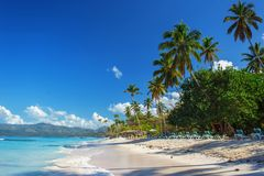 Perfect empty Caribbean sandy beach with clear water and green palm trees. Perfect empty Caribbean tropical sandy beach with clear water and green palm trees Stock Image