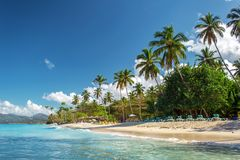 Perfect empty Caribbean sandy beach with clear water and green palm trees. Perfect empty Caribbean tropical sandy beach with clear water and green palm trees Royalty Free Stock Image