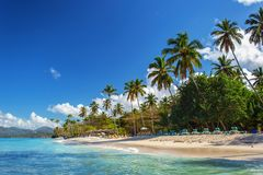 Perfect empty Caribbean sandy beach with clear water and green palm trees. Perfect empty Caribbean tropical sandy beach with clear water and green palm trees Stock Photography