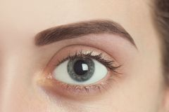 Free Perfect Eyebrow After Correction Royalty Free Stock Photos - 101965738