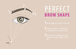 Perfect eyebrow shape tutorial. vector template Stock Photo