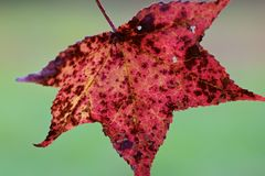 Perfect Fall Leaf Royalty Free Stock Photos