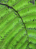A perfect fern leaf Stock Image