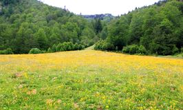 Perfect flowers meadow in trees mountain Stock Photos