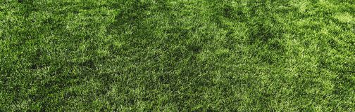 Green lawn texture top panoramic view for background. Perfect fresh green lawn texture top panoramic view for background Stock Image