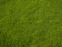 Perfect fresh lush short green grass - background Royalty Free Stock Photography