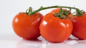 Perfect fresh red wet tomatoes with tomato on background super macro shot. Perfect fresh red wet tomatoes with tomato on background, very soft focus, super stock footage