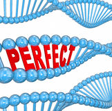Perfect Genes DNA Hereditary Health Good Wellness Condition. Perfect word in 3d letters in a DNA strand to illustrate hereditary good health and wellness running Royalty Free Stock Photography