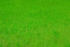 Perfect grass Royalty Free Stock Photos