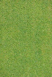 Perfect grass. Background texture from a golf course Royalty Free Stock Photos