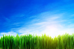 Perfect grass field nature background Royalty Free Stock Photo