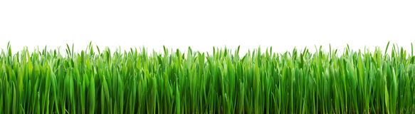 Perfect grass isolated stock images
