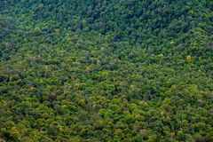 Free Perfect Green And Dense Tropical Rainforest. Royalty Free Stock Photos - 120906478