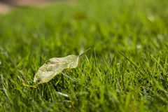 Perfect green background by the fresh grass Royalty Free Stock Image