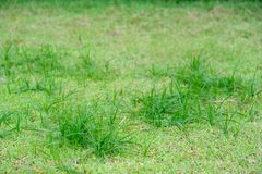 Perfect green blur background by the fresh grass Royalty Free Stock Photography