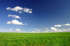Perfect green field. On sunny day Royalty Free Stock Photo