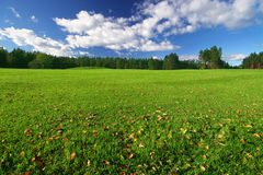 Perfect green field. On sunny day stock photography