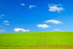 Perfect Green field & blue sky Royalty Free Stock Photography