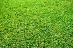 Perfect green grass Stock Images