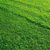 Perfect green grass Stock Photos