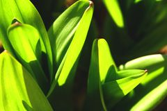 Perfect green grass and dew abstract background stock image