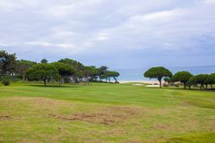 Perfect Green grass on a golf field Royalty Free Stock Image