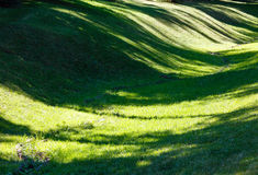 Green grass lawn with shadows. Royalty Free Stock Photos